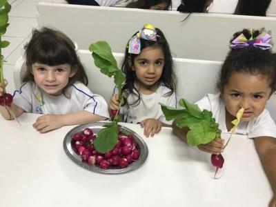 Rabanetes da horta para os alunos